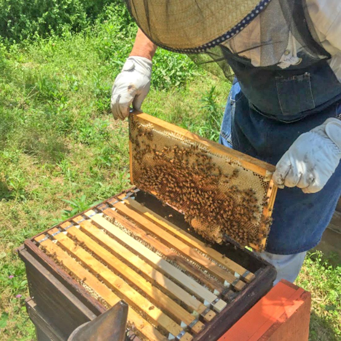 峠の蜂蜜商品写真